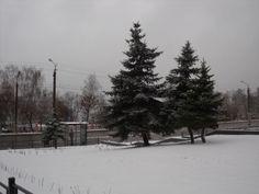 Arbolitos de Navidad con nieve, por fin veo algo así.