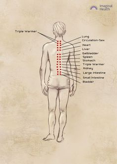 Neurolymph back (2) spinal flush