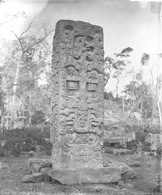 Back view of Stela B; stands almost in the centre of the northern half of the Great Plaza. Copán, Honduras. Photographed by Dr Alfred Percival Maudslay in 1890 - 1891. -British Museum-