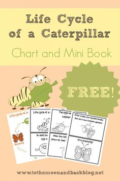 C is for Caterpillar {The Ultimate List of Caterpillar Resources for Preschool and Early Elementary and FREE Printable}