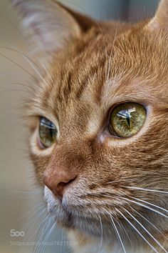 The Great Cat Blog