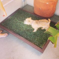 Building your own grass dog potty box is easier than you think. The hard part is picking up grass for it every week or two. How To Potty Train A Dog In An Apartment Indoor Dog Potty, Dog Litter Box, Basic Dog Training, Potty Training, Training Tips, Dog House Plans, Dog Fence, Just In Case, Puppies