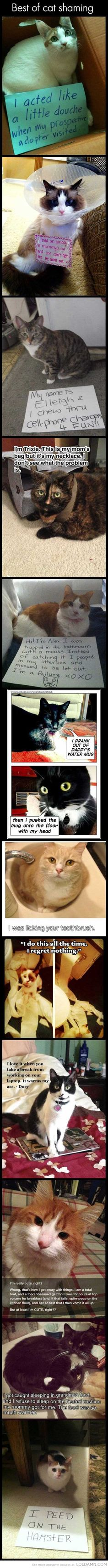 Funny cats: Best of cat shaming.... omg my cat is a pure Angel compared to these lil demons lol