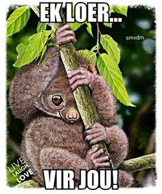 Shy Little Potto and Katydid by *Psithyrus Digital Art / Drawings & Paintings Animals Beautiful, Cute Animals, Draw Animals, Realistic Animal Drawings, Art Drawings, Slow Loris, All Gods Creatures, Primates, Wildlife Art