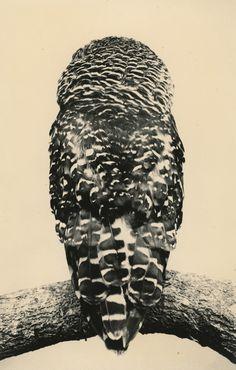 """Tori, qui veut dire """"oiseau"""" en japonais, est la sixième exposition de Masao Yamamoto à la Galerie Yancey Richardson et reflète l'obsession de l'artiste pour les oiseaux. L'exposition comprend des photographies tirées à la main, couvrant la carrière de Yamamoto, ainsi que des oeuvres récentes, des rouleaux de papier traditionnels japonais."""