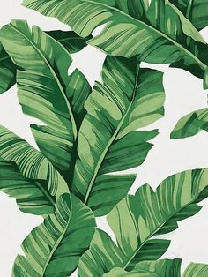 62 Ideas for plants wallpaper iphone leaves tropical Leaves Wallpaper Iphone, Plant Wallpaper, Nature Wallpaper, Banana Leaves Wallpaper, Palm Leaf Wallpaper, Pink Flower Wallpaper, Wallpaper Backgrounds, Summer Wallpaper, Wallpaper Patterns