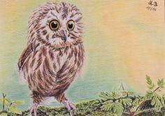 Baby owl. Drawing in colored pencil. Baby Eule. Zeichnung mit Buntstiften