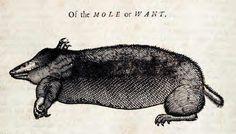 Mole or Want