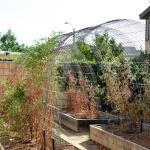 our tomato arbor : CAKIES