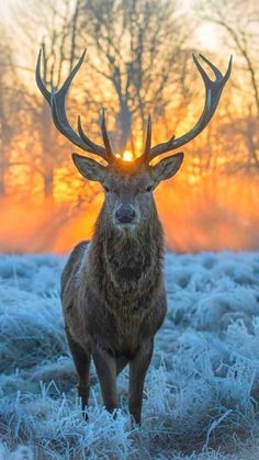 Wildlife Nature, Nature Animals, Wild Animals Photography, Nature Photography, Photography Ideas, Cumbria, Beautiful Cats, Animals Beautiful, Moose