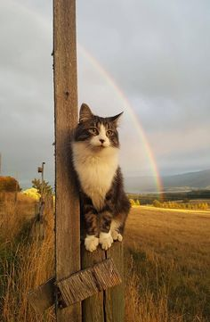 Somewhere over the rainbowTap the link to check out great cat products we have for your little feline friend!