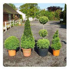 architectural plants and containers | Architectural Plants & Topiary