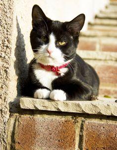Scratchy Cat   Pawshake Cwmbran