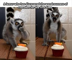 The lemurs face... This is way too accurate