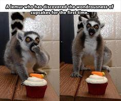 Oh my gosh say the lemur XD LOLZ o_O