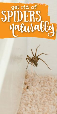 HOW TO KEEP SPIDERS AWAY FROM YOUR HOUSE - No chemicals required! This natural house hack will make sure there are no creepy crawly spiders in your home.