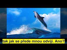 Vždy jste na správné cestě - Abraham Hicks Abraham Hicks, Whale, Youtube, Animals, Whales, Animales, Animaux, Animal, Animais