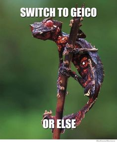 Geico wants your soul in exchange for car insurance