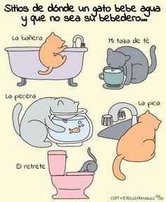 Sitios en donde un gato bebe agua y que no sea su bebedero...