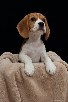 Beagle in a Box