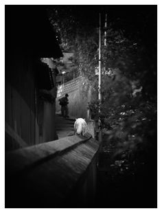 ある日の尾道、猫の細道で