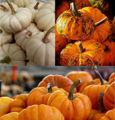 rsz_pumpkins2