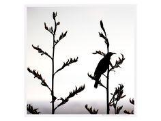 Tui Contemplation canvas from Yoyo. Could be a really cool stencil! Cool Stencils, Bird Stencil, Tui Bird, Nz Art, Corten Steel, Bird Patterns, Silhouette Design, Stone Art, Metal Art