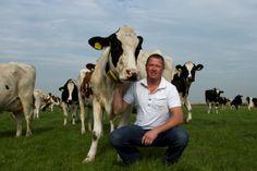 Compino boer Freek met zijn koeien