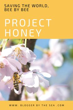 #project #honey #saving #bees #lifestyle #blog #parenting #blogger #save #bee #world #planet #earth #bloggers #nursery #preschool #playgroup #pollen #pollination #honeybee
