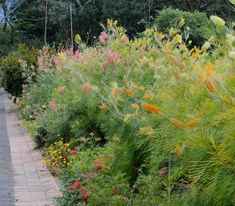Tropical grevilleas have many different shades of large showy flowers in yellow gold pink and red @ Illawarra Grevillea Park N. Australian Garden Design, Australian Native Garden, Australian Native Flowers, Australian Plants, Australian Bush, Bush Garden, Hillside Garden, Garden Shrubs, Shade Garden