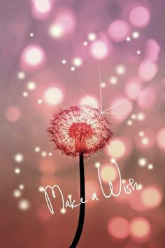 Make a Wish… … Happy Birthday! Make a Wish… More Happy. Best Birthday Quotes, Happy Birthday Images, Happy Birthday Greetings, Birthday Messages, It's Your Birthday, Happy Birthday Niece, Happy Birthday Beautiful Lady, Birthday Eve, Happy Birthday Wallpaper
