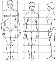 Il corpo umano sia dell'uomo che della donna è circa 8 volte la dimensione della testa di una persona adulta