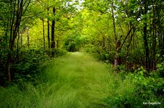 The #SmokyMountains are full of hidden #Hiking trails http://www.diamondrentals.com/