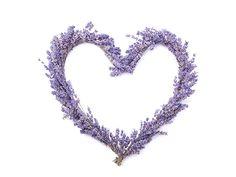 Λεβάντα για την πίεση και τις αρρυθμίες Lavender Recipes, Symbols, Jewelry, Jewlery, Bijoux, Icons, Jewerly, Jewelery, Glyphs