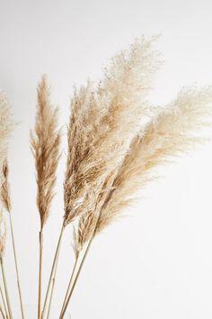 Beige Aesthetic, Flower Aesthetic, Pastel Wallpaper, Flower Phone Wallpaper, Instagram Background, Aesthetic Backgrounds, Less Is More, Neutral Tones, Dried Flowers