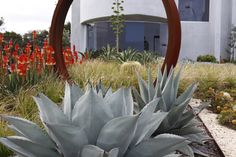 Low maintenance coastal garden filled with cactus and succulents along with native grasses.Garden sculpture taking centre stage. www.rpgardendesign.com.au