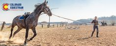 Colorado Equestrian Connection - Tips from Local Equestrians