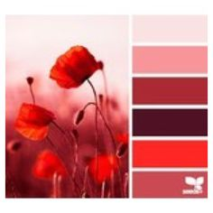 red tones by Design Seeds Colour Pallette, Colour Schemes, Color Combos, Color Patterns, Colors Of The World, Design Seeds, Colours That Go Together, Magazine Deco, Color Balance