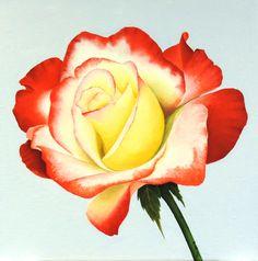 Geel-rode roos  - Olieverf