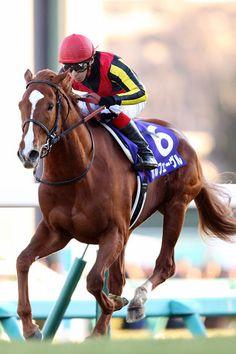 2013年12月22日(日) 有馬記念 ゴール写真 6:オルフェーヴル