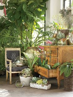 indoor gardening: daily basics (chair, table, plate, glass, jar, or etc) combined with greenery and the beauty of flowers