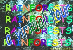 a virtual tour of the Rainforest!