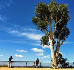 Govetts Leap Lookout. Blackheath. NSW Australia