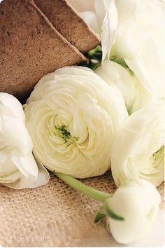 These flowers were in bloom at the park when we got engaged