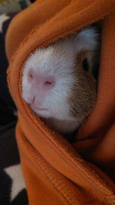 """I felt a great disturbance in the Force"" (it's sort of Obi Wan cloak-ish, no?)"