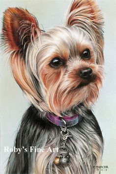 "Draw Dogs Yorkshire Terrier Dog Art Print ""Elle"" Giclee by Realism Artist Roby Baer Terrier Breeds, Terrier Dogs, Animal Paintings, Animal Drawings, Pastel Paintings, Yorky Terrier, Realism Artists, Yorkshire Terrier Puppies, Dog Portraits"
