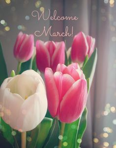 welcome march, spring, march, frühling, märz, fürhlingsanfang. by trendlover