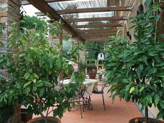 A Pleasant sit out. Lucca, Tuscany, Bella, Vacation, Plants, Italia, Vacations, Tuscany Italy, Plant
