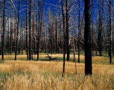 How megafires are remaking America's forests http://news.nationalgeographic.com/2015/08/150809-wildfires-forest-fires-climate-change-science/