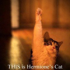 THIS is Hermione's cat.
